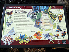 2014-03-31: Butterflies of Strawberry Hill