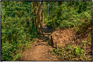 Sutro Forest Trail